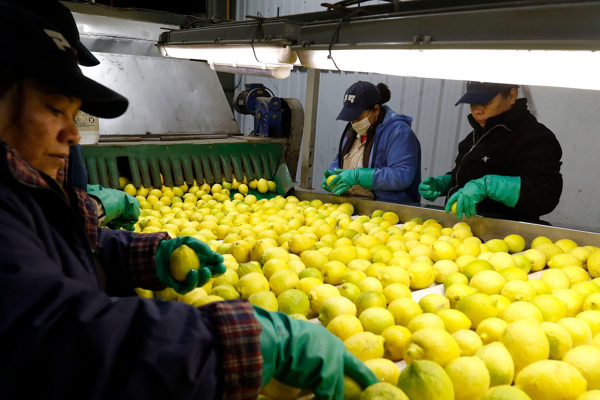 India: el limón argentino ya puede ingresar a ese mercado