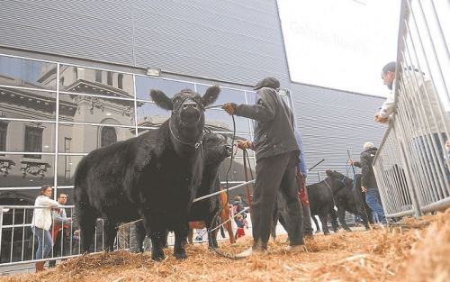 La ganadería argentina recupera protagonismo