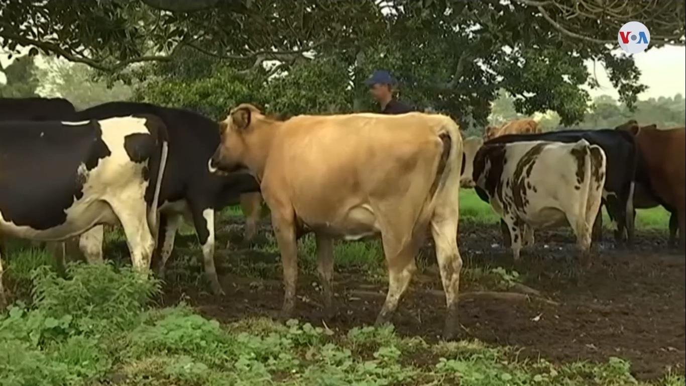 ¿Cambiará la industria láctea?