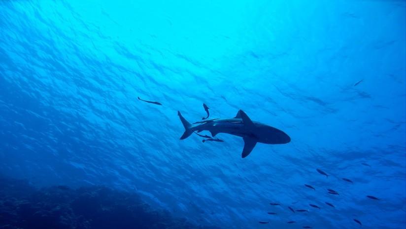Descubren tiburones que brillan en el fondo marino gracias a un mecanismo único