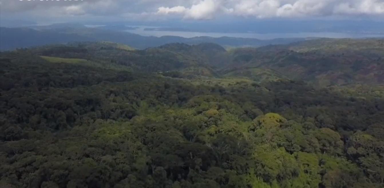 El Fondo Mundial para la Naturaleza pide la declaración de emergencia de bosque planetario