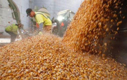 Las compras de maíz marcan un nuevo récord