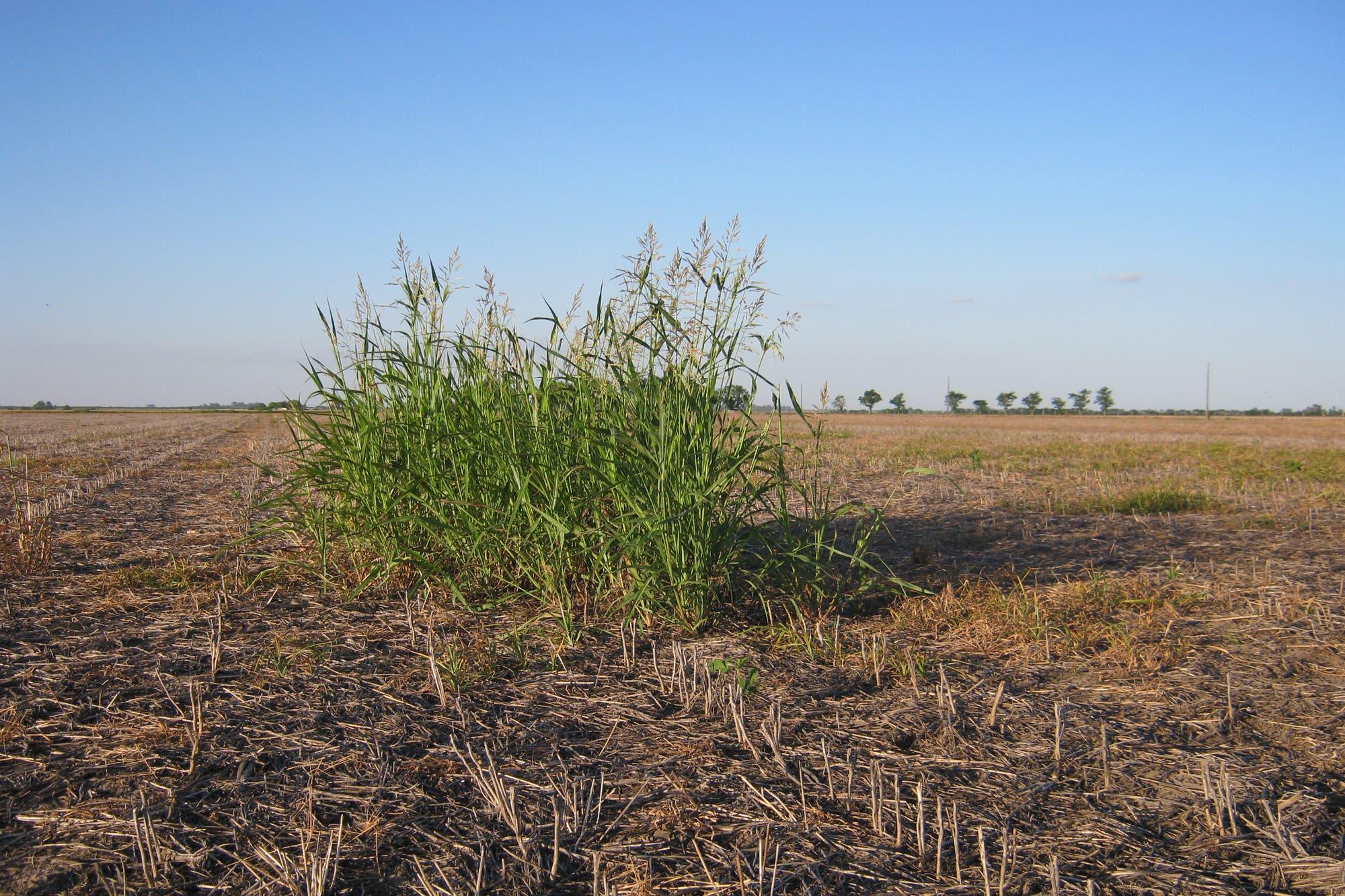 Por qué son buenos los cultivos de cobertura