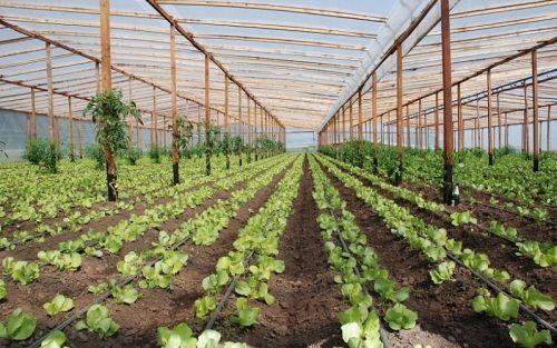 Mejoran las garantías en la inocuidad de alimentos