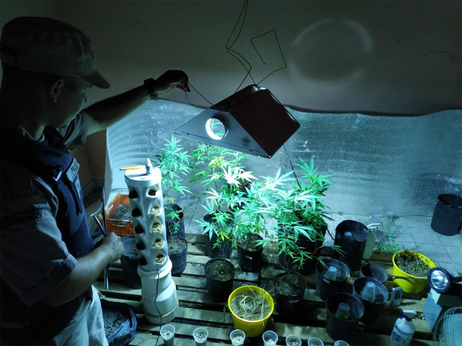 Prefectura allana vivienda donde había un vivero con plantines de marihuana