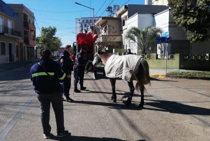 Suman un total de 40 los caballos retenidos en la vía pública