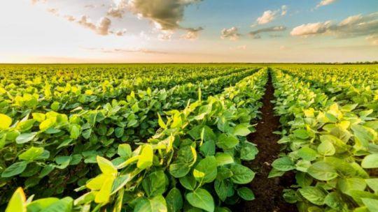 soja:-productores-del-norte-aclaran-no-cobrar-los-precios-internacionales