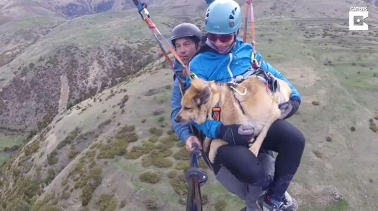 video:-el-perro-que-surca-los-cielos-a-mas-de-dos-mil-metros-de-altura