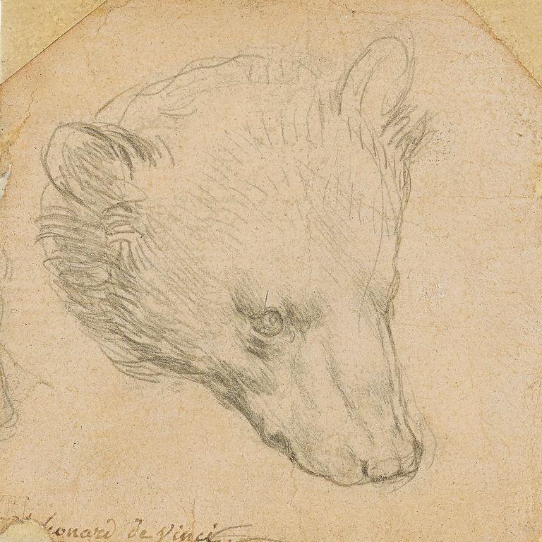"""otro-record-para-da-vinci:-pagaron-us$-12,1-millones-por-""""cabeza-de-oso"""",-el-mas-caro-de-sus-dibujos"""