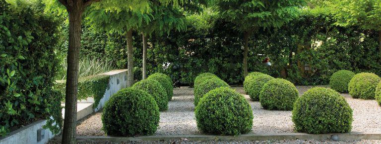 buxus,-la-planta-versatil-y-siempre-vigente-que-admite-multiple-usos-en-el-diseno-de-jardines